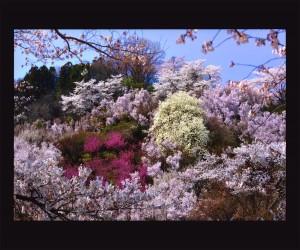 hanamiyama09fotocon